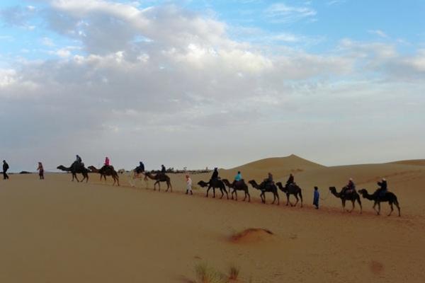 Maroc - Groupe à dos de dromadaire