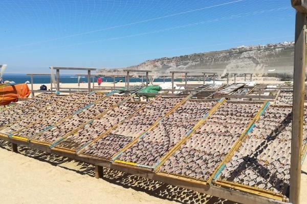 Portugal Nazaré Etal poissons séchés