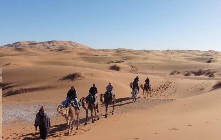 Maroc Automne, Dromadaires à Merzouga