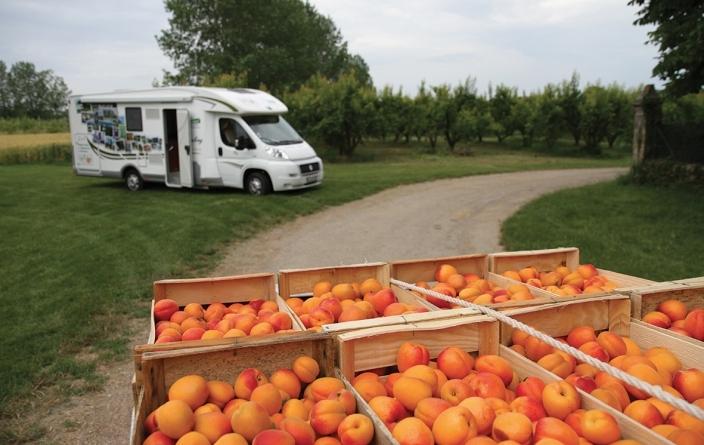 France Pasion - oranges