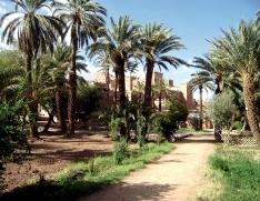 Maroc 12 jrs Agdz